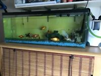 4ft fish tank for sale all included