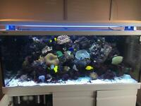 Red Sea Max S650 Marine Aquarium
