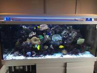 Red Sea Max S650 Marine Aquarium