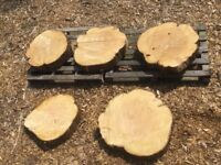 Quantity of large log slices garden stepping stones project etc