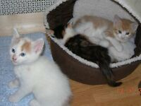 Beautiful, healthy and playful kittens are looking for a new loving home.
