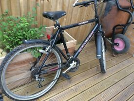 Raleigh Max Hybrid Bike