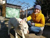 Dog walking, feeding, petsitting