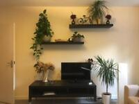 PUTNEY HOUSE CLEARANCE - PLANTS AND DECORATION ITEMS