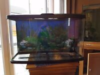 Curved 86ltr fish tank