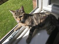 Cat, female, 9 months old