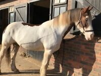 Horse For Loan/Share