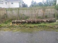 Monkey puzzle wood lengths - wood turning