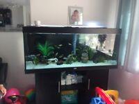 Fish Tank Juwel 400