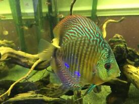 8x discus for sale £30 each