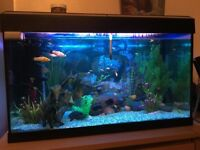 Fluval Roma 125 litre tank with around 50 tropical fish