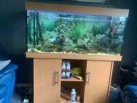 Fish tank ( aquarium)