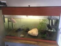 3ft fish tank full setup