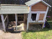 3 x female rabbits and hutch