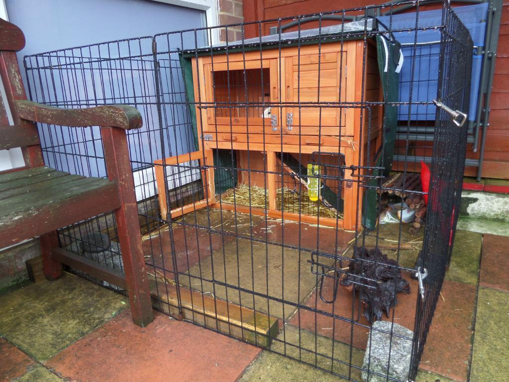 Two male guinea pigs cage run for sale united for Small guinea pig cages for sale