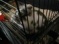 Lovely rabbit with two floor cage