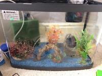 Panorama aquarium 40litre
