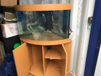 190 litre jewel fish tank