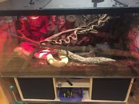 Two glass vivariums for sale - 122w x 51d x 56h Less than a year old