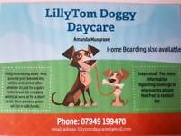 Lillytom Doggy Daycare