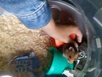 Lovely Wee Hamster