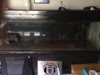 6x2x2 fish tank