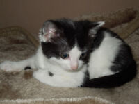 ~2 male kittens looking for a loving home together~