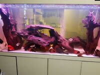 Fish Tank with Sump, Bogwood, Plecos and fish. selling separately