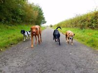 dogs4walks Dog Walker, Fully Insured & DBS checked, Dog Walking and Cat Sitting