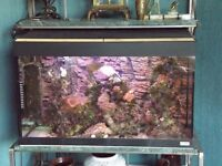 marine/coral/fish/ saltwater aquarium tank
