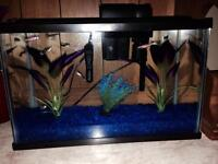5.5 gallon tank with fish or without!