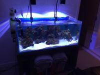 340 litre optiwhite braceless fish tank