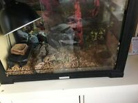 leopard gecko lizard tank full set up WITH FREE LEOPARD GECKO INCLUDED