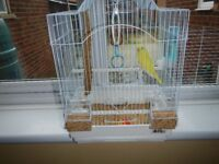 BABY LUTINO HAND TAME BOY BUDGIE AND NEW CAGE