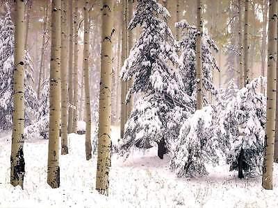 HD Stock Photo 25000 3 Dvd Xmas Snow Christmas Winter Setting Diy Card Folder