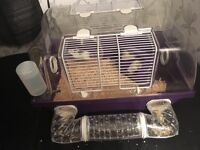 FREE hamster and cage pick up Carmunnock