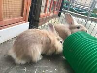 Three boys and four girl rabbits for sale