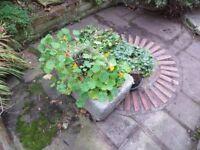 Old Victorian Sink as Garden Planter