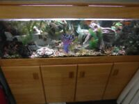 5ft fish tank with cabinet, heater, pump, filter, plants, ornaments, lights etc