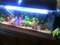 200 lt clear. Seal fish tank complete