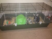 Female Rex rabbit with indoor cage and outdoor hutch with run