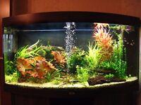 Juwel Vision 260 fish tank aquarium with stand - bargain price!