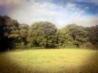 Grass Livery