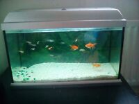 Large 45ltr glass fish tank and fish