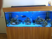 FISH TANK 5X2X2 WITH UNIT AND PELMET