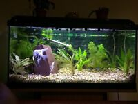 Aquarium with stand and fry tank mint.