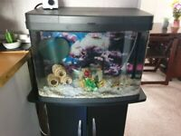 Tank set up with fish