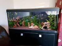 4ft aquarium all you need