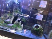 Mixed tropical fish and guppies