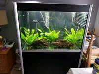 275 litre fish tank